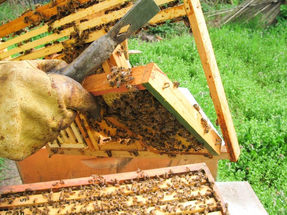 apicoltore mmape museo dell'ape ti amo trentino