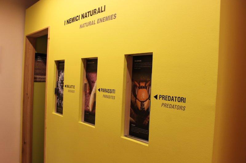 le malattie delle api mmape museo dell'ape ti amo trentino
