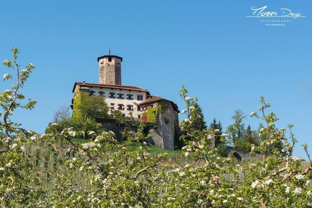l'imponenza di Castel Valer che dall'alto della sua torre osserva la fioritura dei meleti