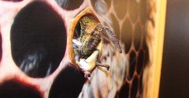 nel nido mmape museo dell'ape ti amo trentino