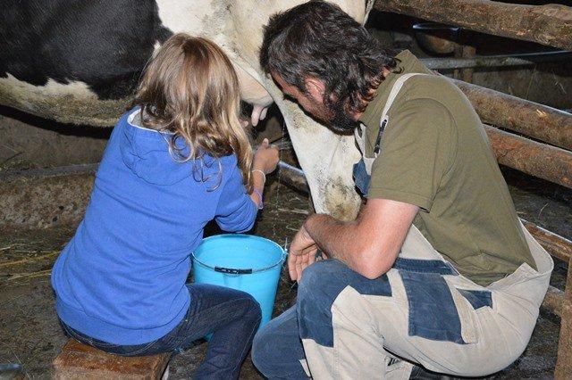 una bambina impara a mungere una mucca, raccogliendo il latte in un secchio