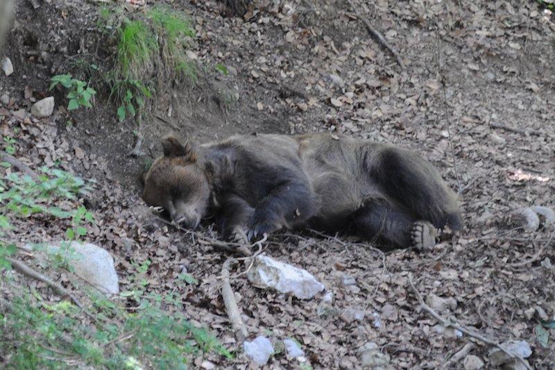 cosa fare se incontri l'orso ti amo trentino