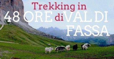 ill sasso lungo sullo sfondo e un gruppo di mucche tibetane che brucano l'erba nei verdi prati al Passo Sella