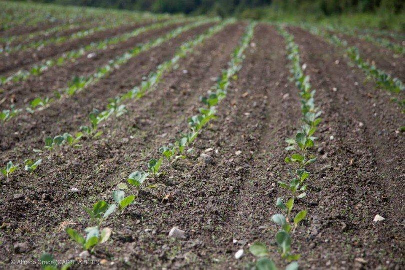 le coltivazioni biologiche della val di gresta